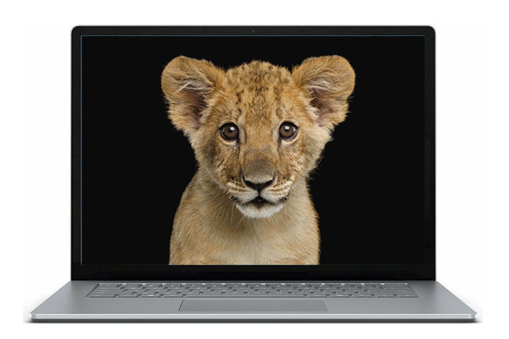 Young Lions online